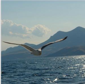 2015-06-22_153424-море-чайка